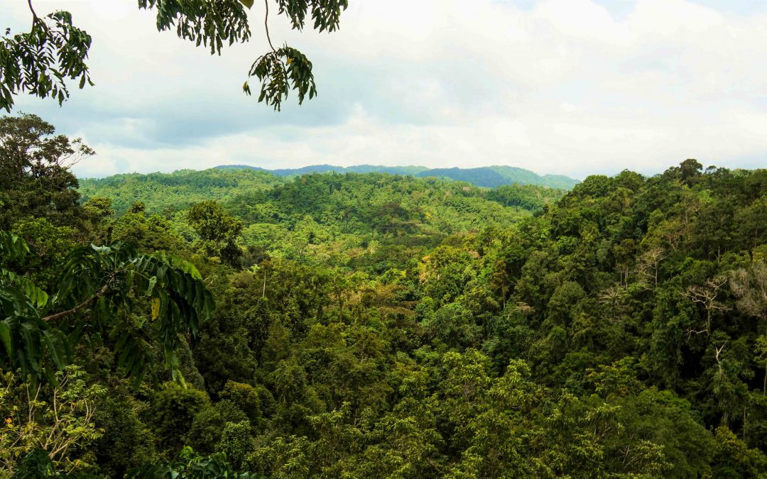 Canopy Science and the Life Epiphytic
