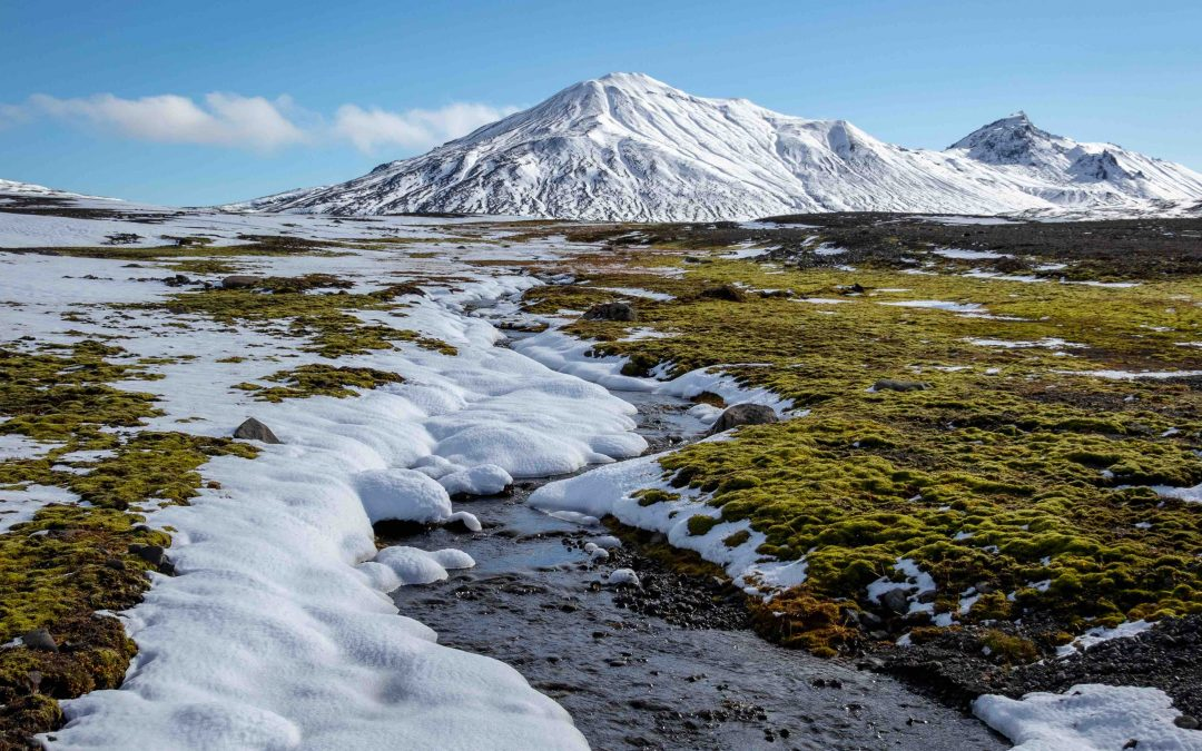 The Arctic Carbon Balance: Soils Will Hold the Key